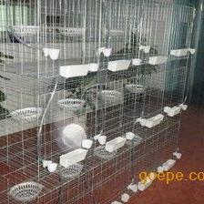 安平纳诚现货供应邯郸魏县12位鸽子笼子 鸽子笼子价格