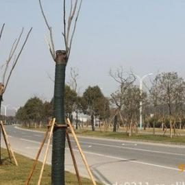 两布一膜大树防寒保温缠绕包覆绷带