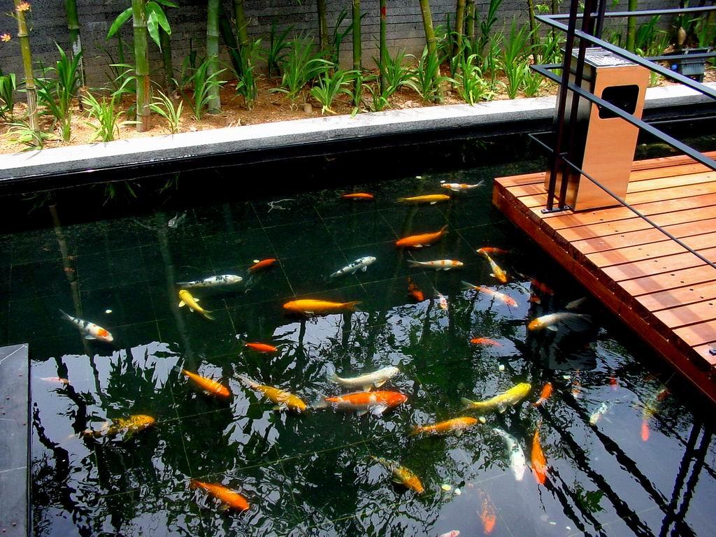 恒运福鳞园林鱼池设计隶属于金明区恒运福鳞水族