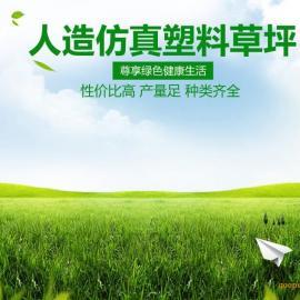 足球人造草坪―新朝阳人造草坪