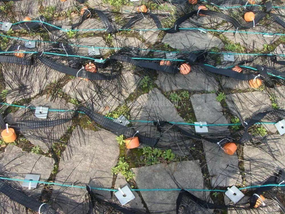 碳素纤维草