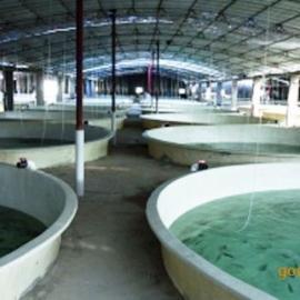 封闭式循环水养殖系统