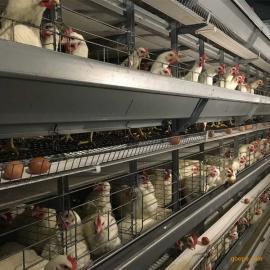 4层蛋鸡笼_大佳笼具出口标准生产