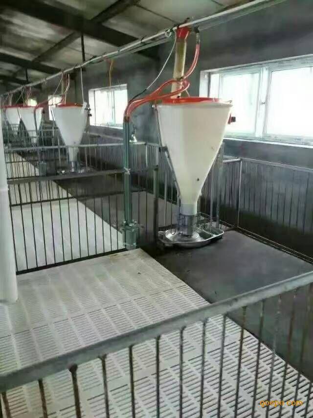 猪场自动化料线,新型全自动清粪机,智能化粥料器,欧式母猪产床,欧式