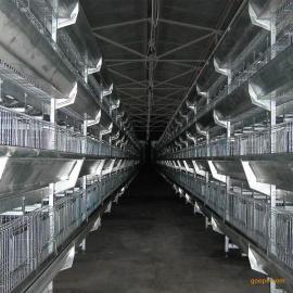 大规模养殖肉鸡笼_就选大佳笼具