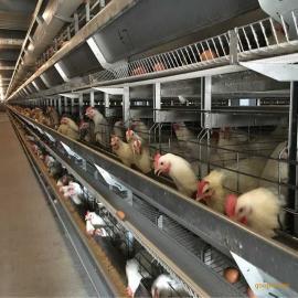 四层阶梯式蛋鸡笼养设备_选择大佳笼具