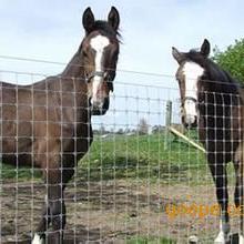 现货养殖围栏|养殖鹿网|养殖护栏网|养鸡护栏网批发推荐安平百瑞&