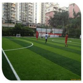 专用生产销售时宽人造草坪 PE材质足球场专用人工草坪 运动仿真草