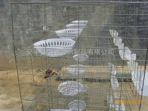 鸽子养殖笼,3层12位鸽笼,优质镀锌鸽笼现货