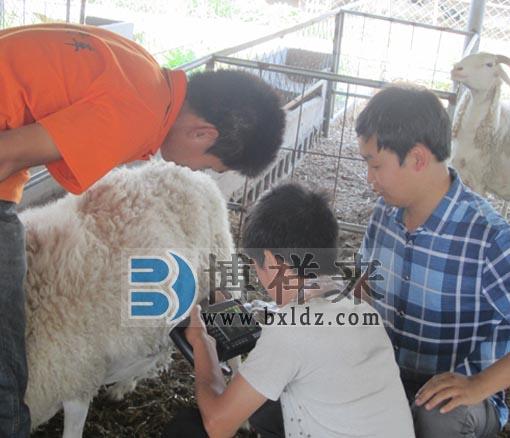 便携式羊用B超测孕仪