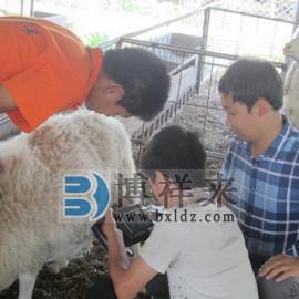 羊用B超,羊用B超机应用