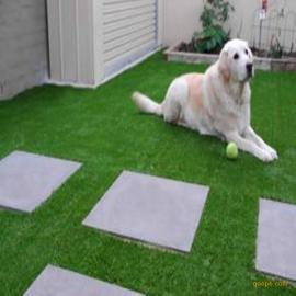 广东时宽双色PE人造草坪,耐高温寿命长仿真人工草,假草批发