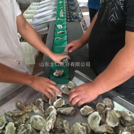山东龙口凯祥海蛎子分选机,分选牡蛎大小机器