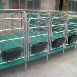 母猪单体栏肥猪限位栏 泊头鹏翔厂家生产自动化养猪设备