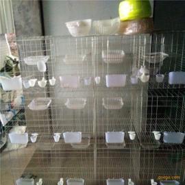 河北利港笼具批发三层12位四层16位肉鸽养殖笼@鸽子笼配件