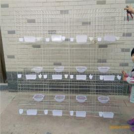 【利港】笼具厂家供应山东江西三层12位鸽笼@肉鸽养殖笼@