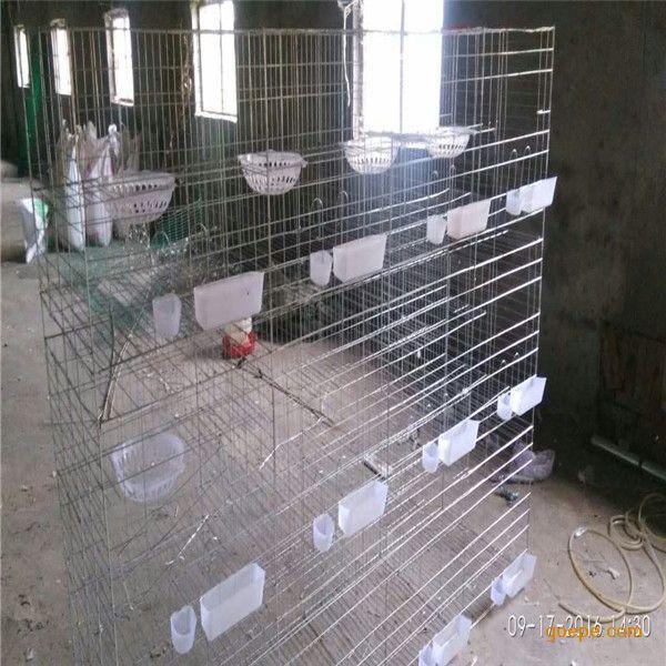 河北利港丝网大量供应肉鸽三层12位鸽子笼,鸽子笼配件,鸽笼的高度有1.5米,1.7米。采用低碳钢冷拔丝焊接具有坚固耐用,美观大方,适用方便,节省空间,易清理防病抗役等特点。有特殊要求可定做。 产品介绍: 鸽笼:推拉门。 材质:优质低碳钢丝。 规格: 1.5米x2米,1.7米x2米。三层12笼位。1.