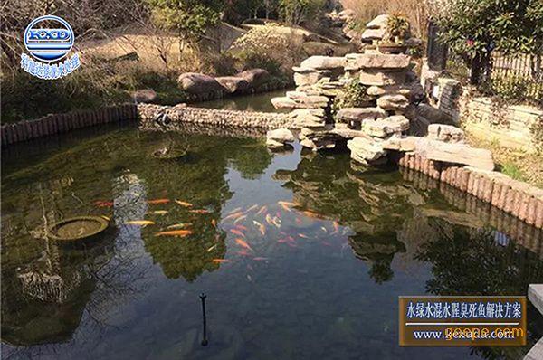 青岛500吨别墅鱼池过滤,鱼池水处理在哪买