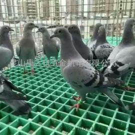 养殖业玻璃钢格栅
