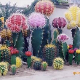 东莞雕塑厂家供应玻璃钢仿真植物雕塑 仿真仙人掌雕塑