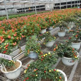 温室花卉种植网片¥沭阳县花卉种植方格网片¥花卉种植育苗床网