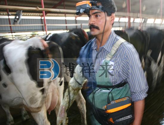 美国EI 进口牛用B超