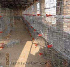 鸽子笼@鸽子笼厂家@鸽子养殖笼具@养鸽专用笼@德州鸽子笼