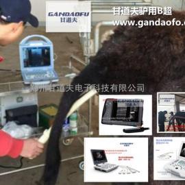 甘道夫驴用B超厂家直肠检测母驴卵泡发育的方法