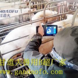 用猪用B超,动物B超,兽用B超检查母猪空怀死胎原因超声图像