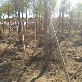 乌兰察布四子王旗树木支撑架厂家包邮正品
