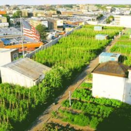 宁波众达绿化公司提供优质的屋顶绿化屋顶环保