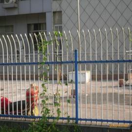 锌钢栅栏网 组装护栏网 市政园林防护网厂家直销