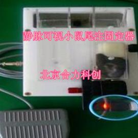 静脉可视小鼠尾注固定器 型号:HL-XKSQ