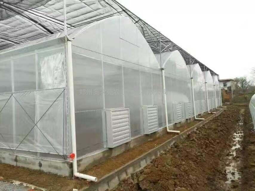 连栋薄膜温室大棚