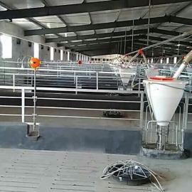 猪场自产自销自动下料线的使用