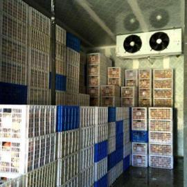 成都冷冻库安装,成都建冷库需要多少成本