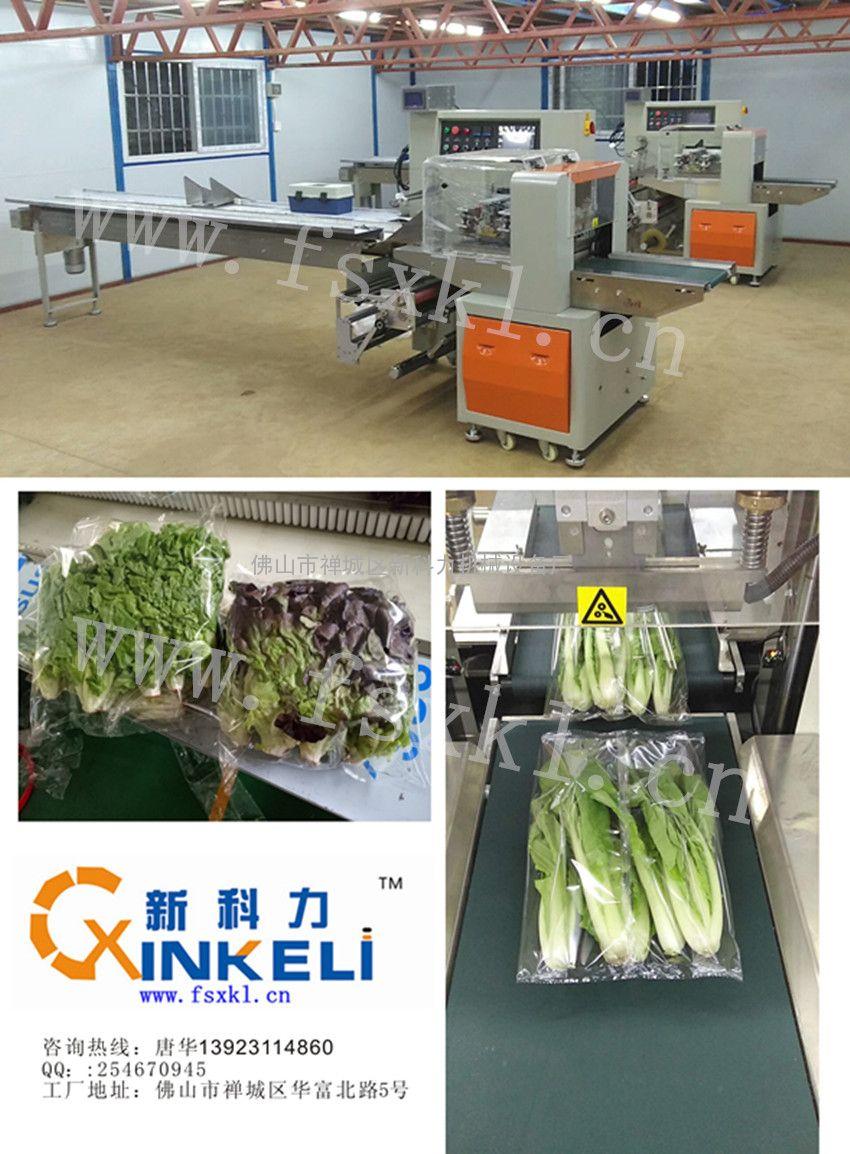 蔬菜公司框架结构图