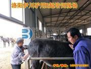 驴用B超机培训