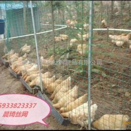养鸡用围栏网@养鸡用围栏网厂家@绿色养鸡用围栏网厂家