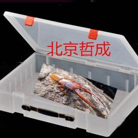 生物探索物品材料、儿童标本制作工具盒