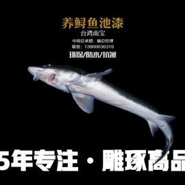 鲟鱼池漆,养鲟鱼池漆,台湾南宝