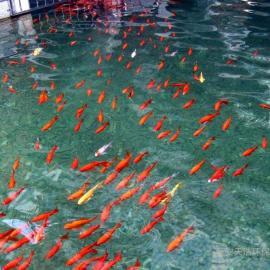 西安景观水处理设备_ 西安景观鱼池水处理设备_景观水治理设备
