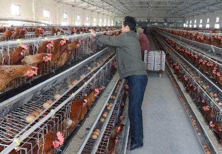 养殖厂除臭剂