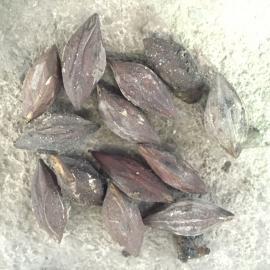 杏去皮去核打浆机 猕猴桃去籽机 果蔬去核去皮机