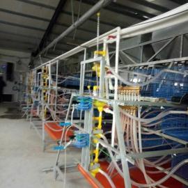 肉鸡笼 蛋鸡笼 肉鸡养殖加温设备 肉鸡配套养殖设备