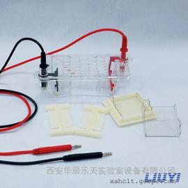 北京六一DYCP-31BN型琼脂糖水平电泳仪