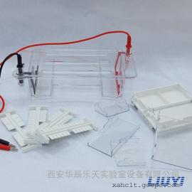 北京六一DYCP-31DN型琼脂糖水平电泳仪(小号)
