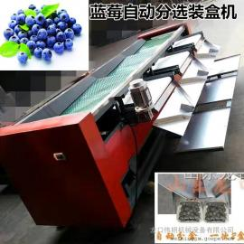 龙口伟明全新精装蓝莓分选机,独家首创蓝莓选果机