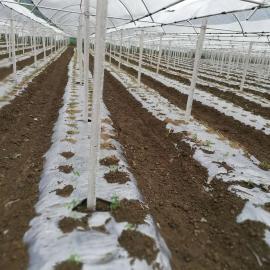 蓝莓除草除虫地膜