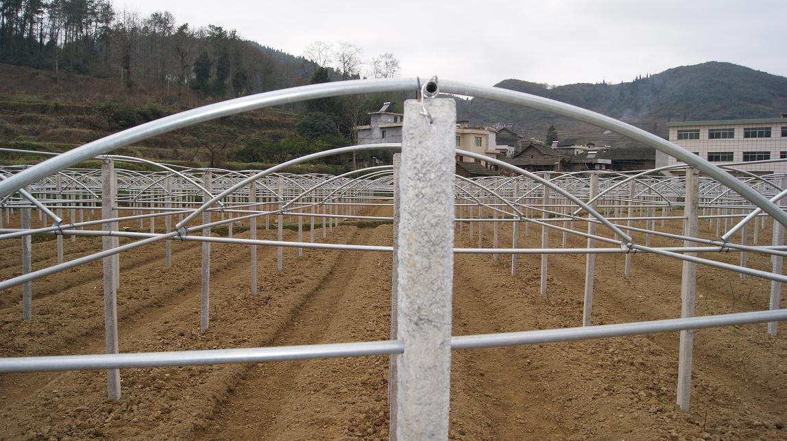 蕃茄避雨栽培棚_贵州避雨棚厂价 贵州葡萄避雨棚材料图片